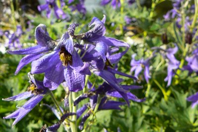 Kwiaty Tatr